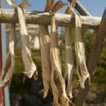 Сушене и осоляване на риба