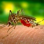Натурални средства за борба с комарите!