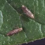 Растения-инсектициди
